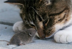 cat-and-mouse-1[1]