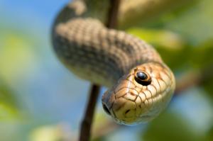 slangen-96[1]