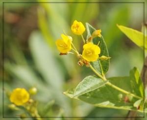 gele+bloem+1[1]