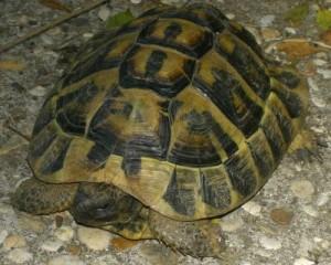schildpad[1]