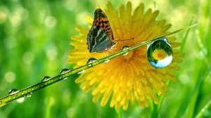 schitterende-achtergrond-met-vlinder-gras-en-paardebloem[1]