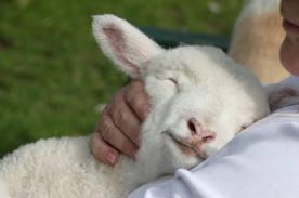 De-Heer-is-mijn-Herder[1]