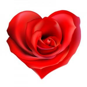 Valentijnsroos[1]