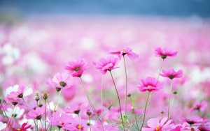 pretty-wildflower-wallpaper-1