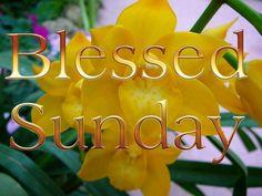 gezegende zondag