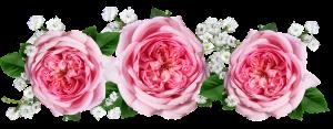 roses-3184369__340